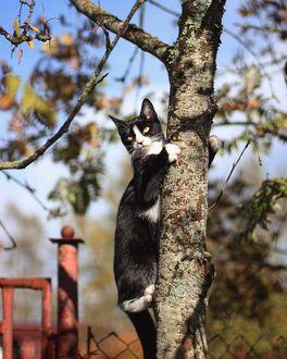 Фото Кошка на дереве, by lena_nezabudochka