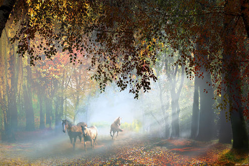 Фото Лошади на осенней дороге, фотограф Igor Zenin
