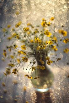 Фото Букет полевых цветов в вазе. Фотограф Valeriya Tikhonova