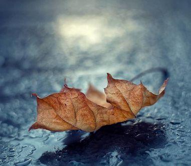 Фото Осенний листик на мокрой поверхности. Фотограф Valeriya Tikhonova
