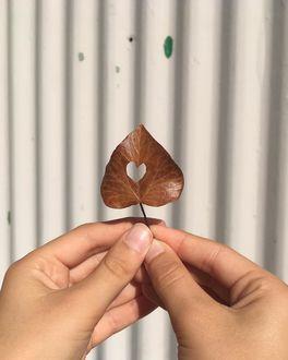 Фото В руке девушки осенний листик с вырезанным сердечком