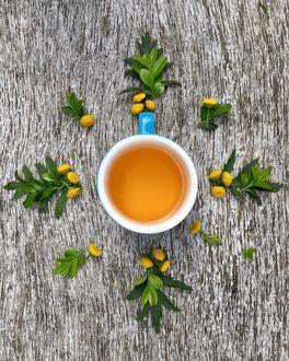 Фото Чашка чая в окружении листочков