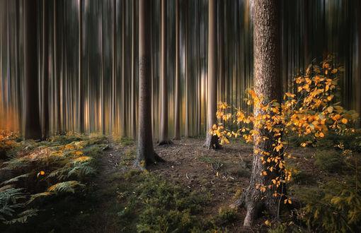 Фото Осенний лес, фотограф Carsten Meyerdierks
