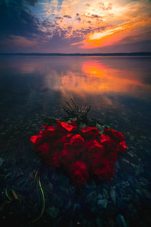 Фото Букет красных роз на воде. Фотограф Руслан Болгов - Axe