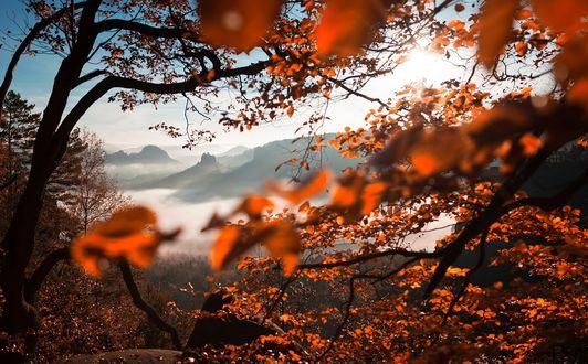 Фото Вид на горы сквозь осенние ветки дерева, by TobiasRoetsch