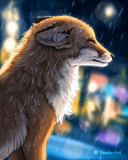 Фото Лиса под дождем, by Vawie-Art