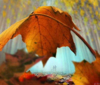 Фото Осенняя прогулка, на переднем плане осенние кленовые листья, автор Игорь Зенин