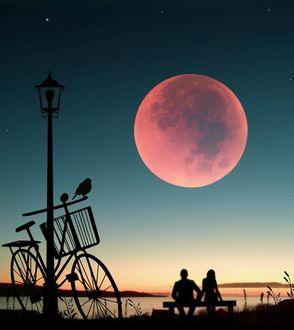 Фото Влюбленные сидят на лавочке и смотрят на полную луну на небе, на переднем плане стоит велосипед, на котором сидит птица, by Abdullah Evindar