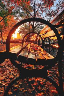Фото Лавочка с осенними листочками на аллее в парке