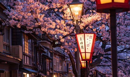 Фото Городские фонари на фоне весеннего дерева