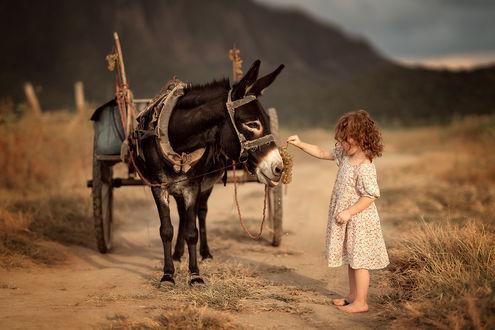 Фото Девочка стоит перед осликом на дороге. Фотограф Юлия Твердова