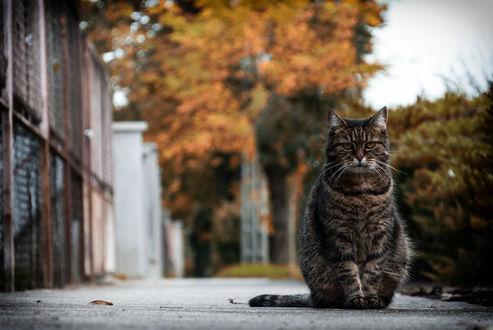 Фото Кошка сидит на улице города, by adamcroh