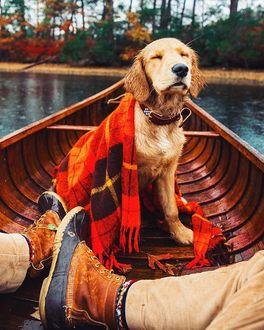Фото Золотистый ретривер наслаждается легким ветерком, сидя в лодке со своим хозяином