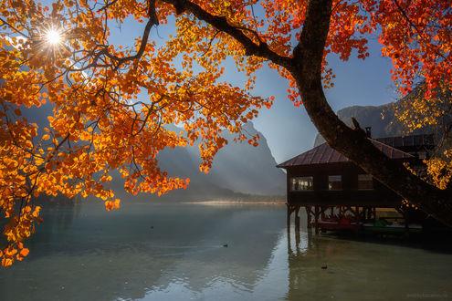 Фото Осеннее дерево над озером с домиком на воде, фотограф Andrew Bazanov