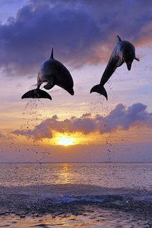 Фото Красивые прыжки дельфинов над водой