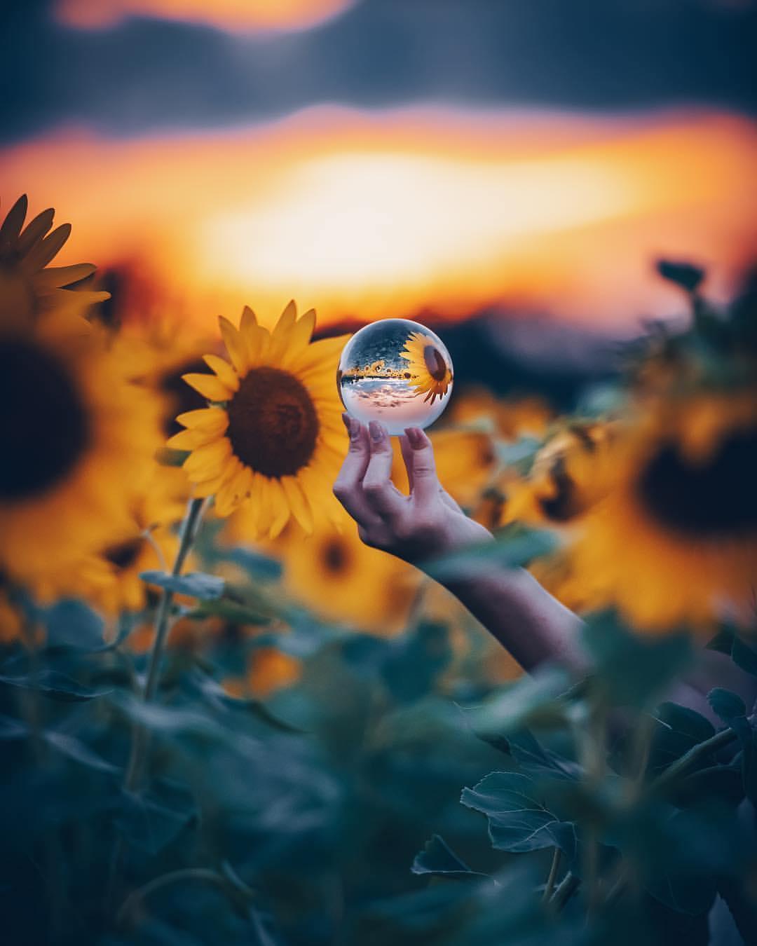 Фото В руке девушки шарик, в котором отражаются подсолнухи