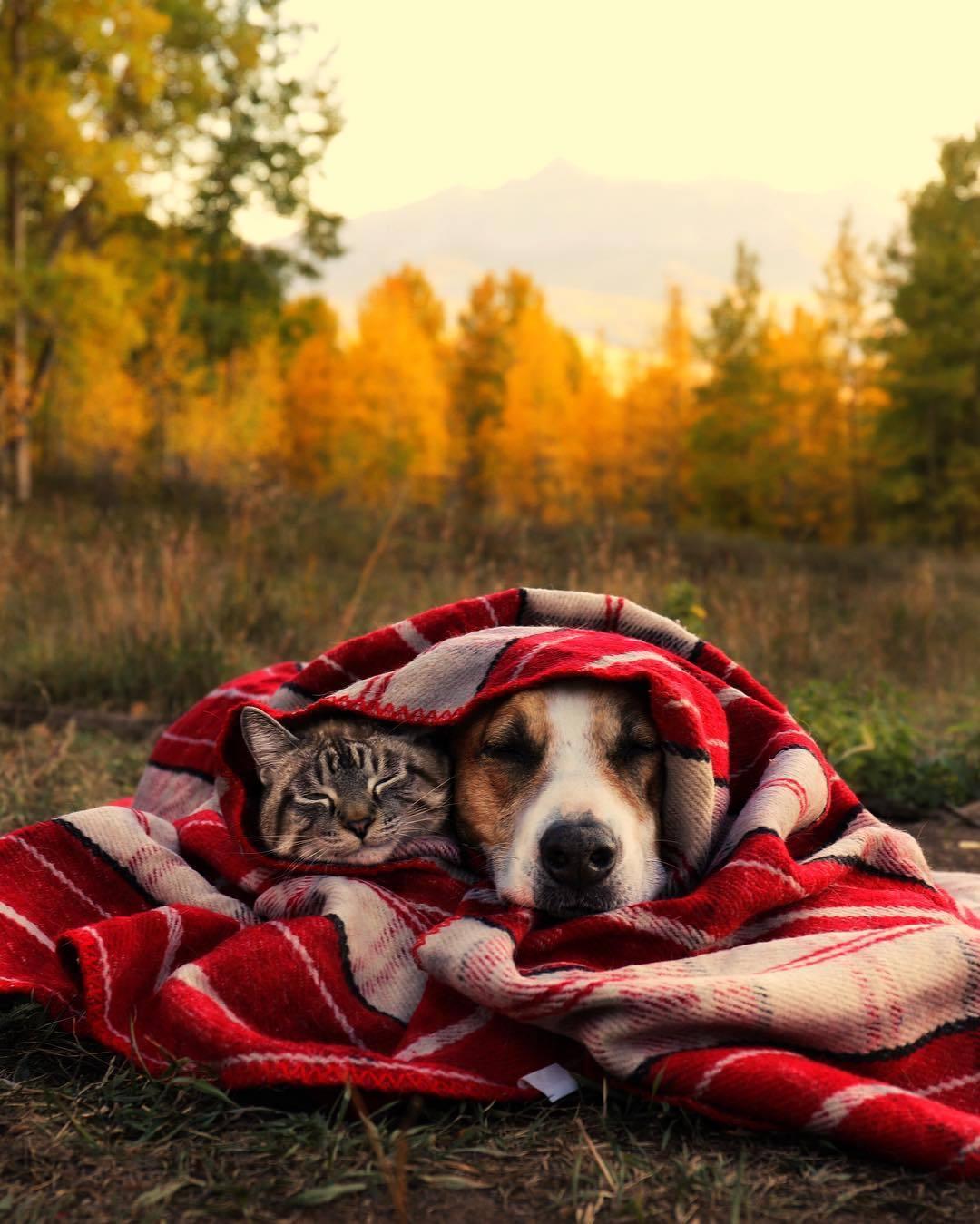 Фото Кошка и собака закутаны пледом