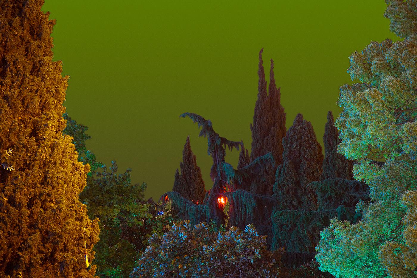Фото В лесу среди деревьев и елок горит огонь, by Local Preacher