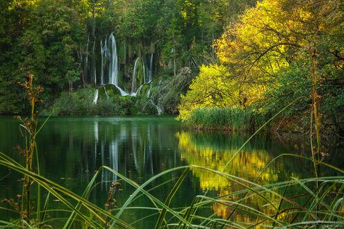 Фото Водопад в лесу