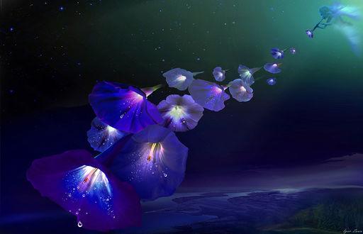 Фото Цветы вьюна на ночном небе отходят от флейты, на которой играет девушка, фотограф Игорь Зенин