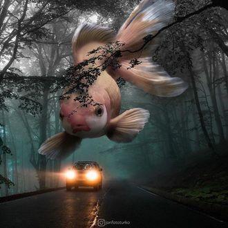 Фото Огромная рыба парит над дорогой с автомобилем
