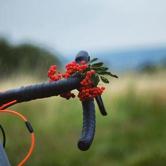 Фото Красная рябина на руле велосипеда