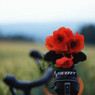 Фото Красные маки на велосипеде