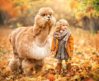 Фото Девочка стоит рядом с ламой, фотограф Ирина Недялкова