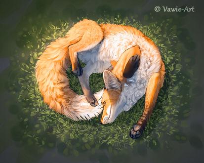 Фото Лиса лежит в зеленой траве, by Vawie-Art