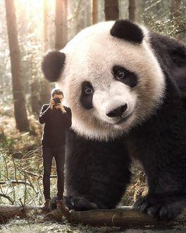 Фото За спиной мужчины, который делает фото, стоит огромная панда