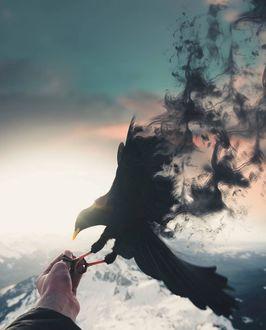 Фото На руке человека сидит ворон, от крыльев которого идет дым