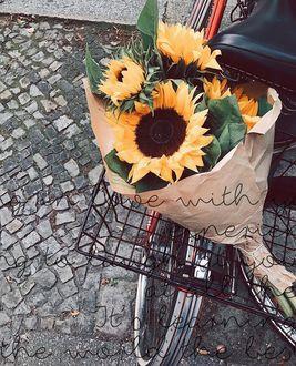 Фото Букет подсолнухов лежит в корзин велосипеда
