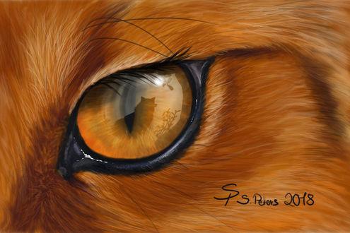 Фото В лисьем глазе отражается лиса, by steffchep