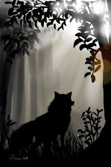 Фото Силуэт лисы, стоящей в лесной чаще, by steffchep
