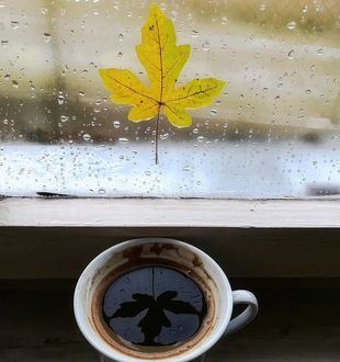 Фото Листик на дождливом окне отражается в чашке с кофе, by gdinmilos