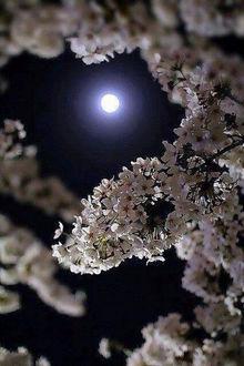 Фото Веточка сирени на фоне ночного неба с полной луной