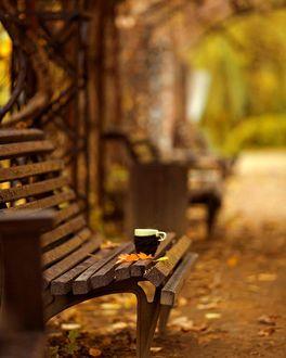 Фото Чашка стоит на лавочке с осенними листочками
