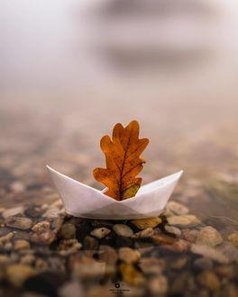 Фото Осенний дубовый листик на игрушечном кораблике