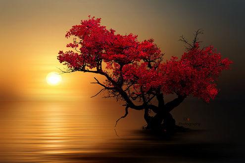 Фото Дерево с красными листьями на фоне заката, by iDs