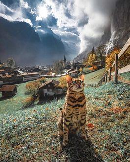 Фото Бельгийская кошка сидит на земле, by sukiicat
