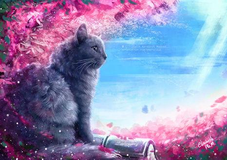 Фото Кошка сидит у цветущей сакуры, by Emeraldus