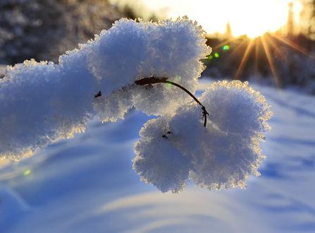 Фото Ветка в снегу. Фотограф Михаил Байбородин