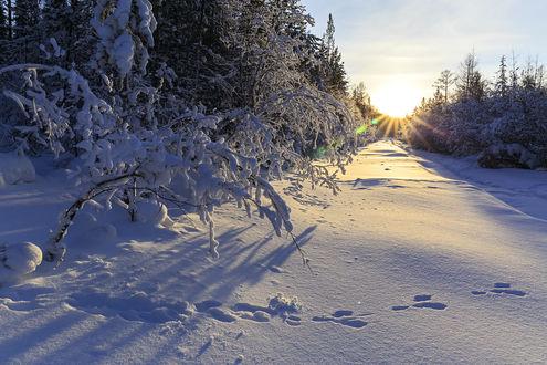 Фото Зимний вечер в лесу. Фотограф Михаил Байбородин