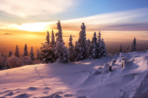 Фото Закат над деревьями в снегу. Фотограф Шарапов Андрей