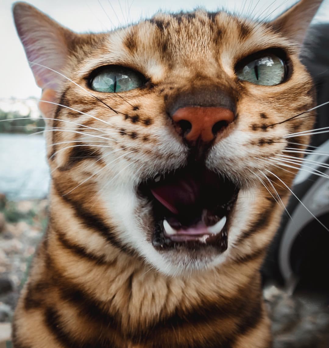 дочка картинки открытый рот кошки отпуска еще