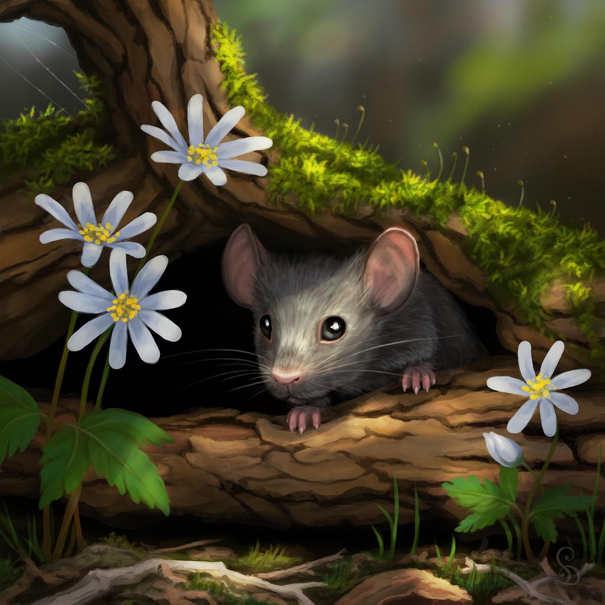 причина картинка красивого мышонка любом