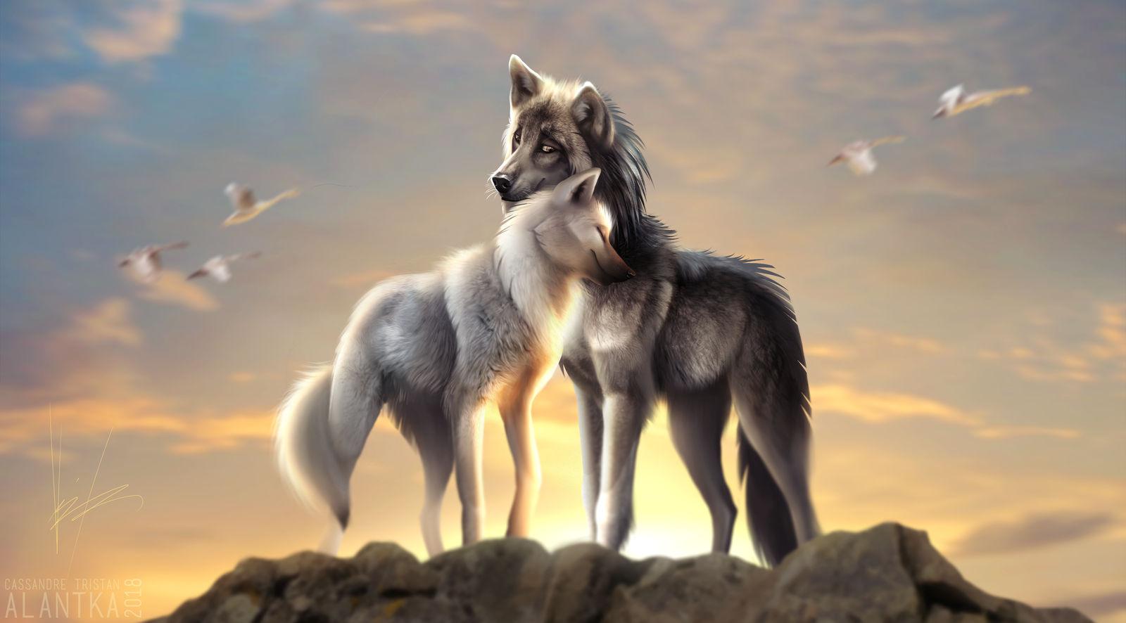 Фото Волк и волчица на вершине скалы на фоне закатного неба, by Alantka