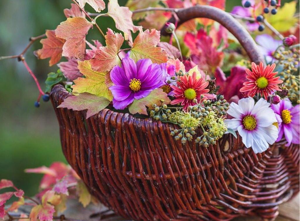 руках полевые цветы в корзинке картинка изначально имело множество