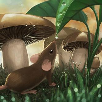 Фото Мышка смотрит на капельку росы, стоя в траве рядом с грибами, by StefanieDworschak