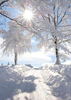Фото Дорога петляет между огромных сугробов и замерзших деревьев и уходит к полуденному зимнему солнцу